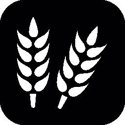 正方形の背景無料アイコンの穀物工場