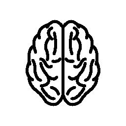 脳上部ビュー概要無料アイコン