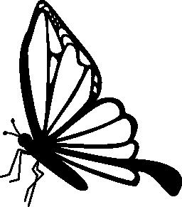 蝶側表示無料アイコン