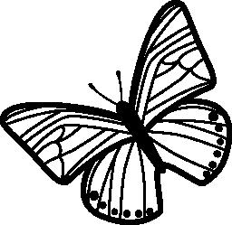 薄い縞模様の蝶の羽でトップ ビュー無料アイコンから左側に回転したパターン